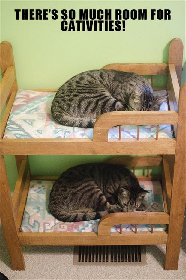 cute cat beds