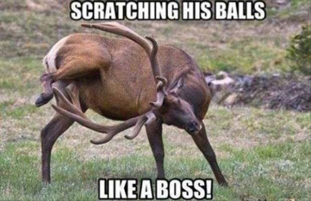 deer scratching his balls