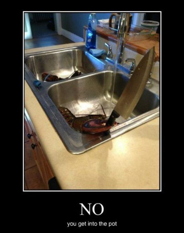 demotivational posters, dumpaday (8)