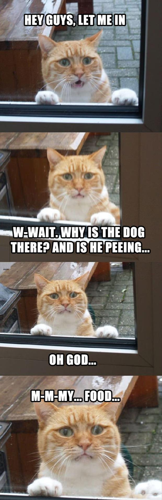 dog peeing on cat's food