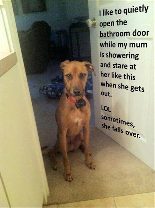 dog shaming funny pictures