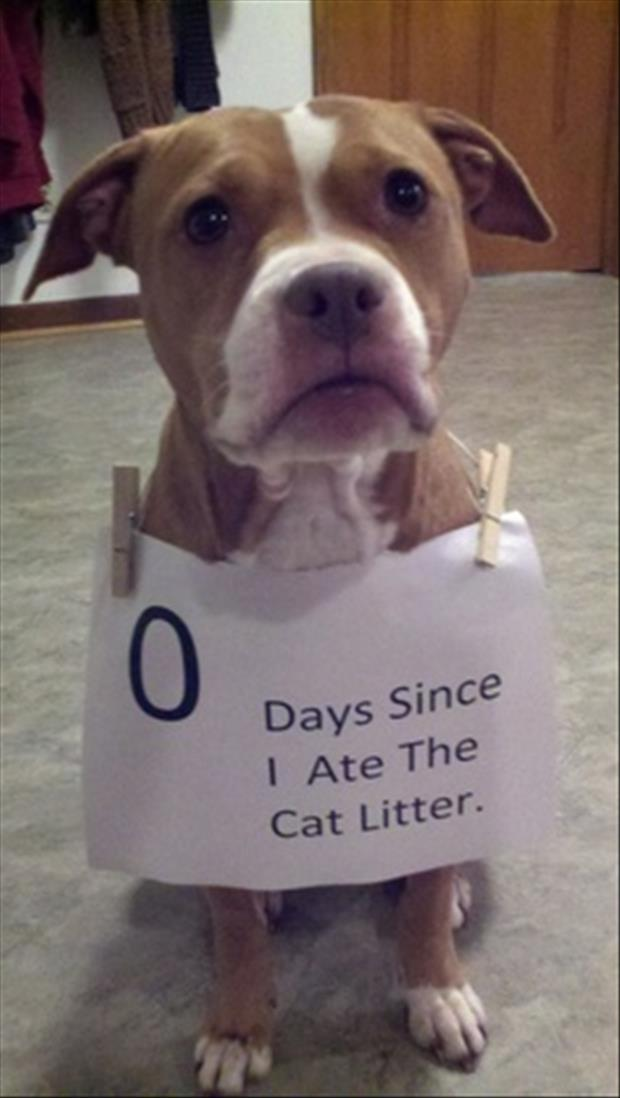 dogs eat cat liter