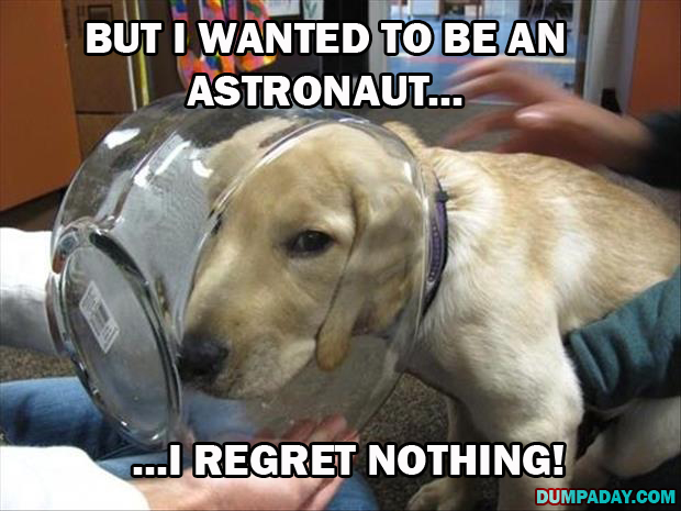 dogs regret nothing (11)