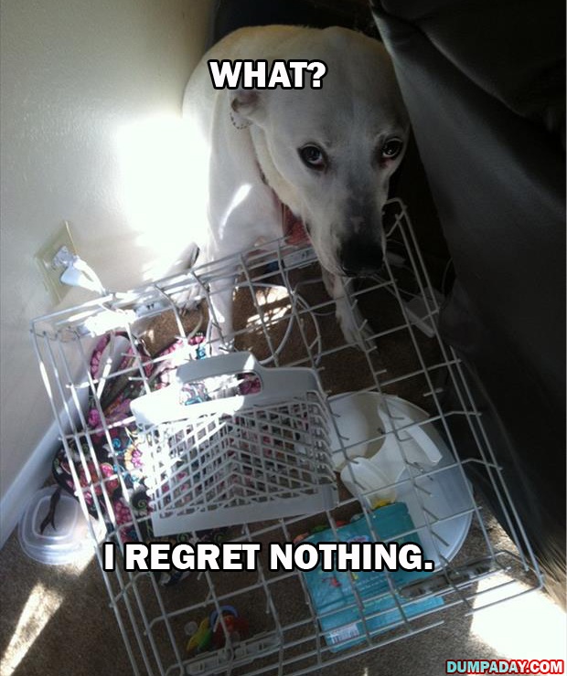dogs regret nothing (3)