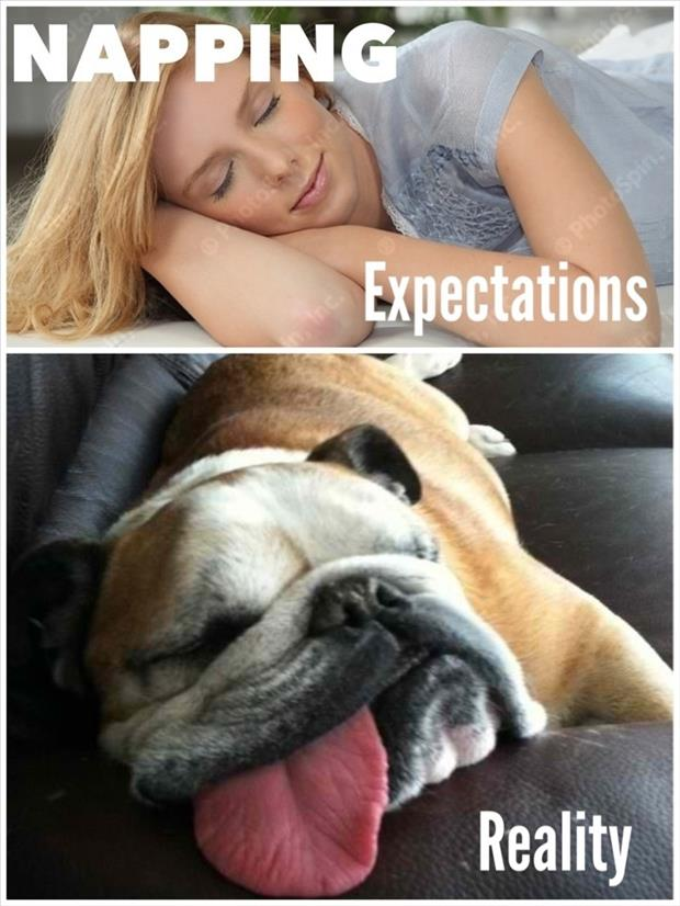 expectations vs reality meme, dumpaday (16)