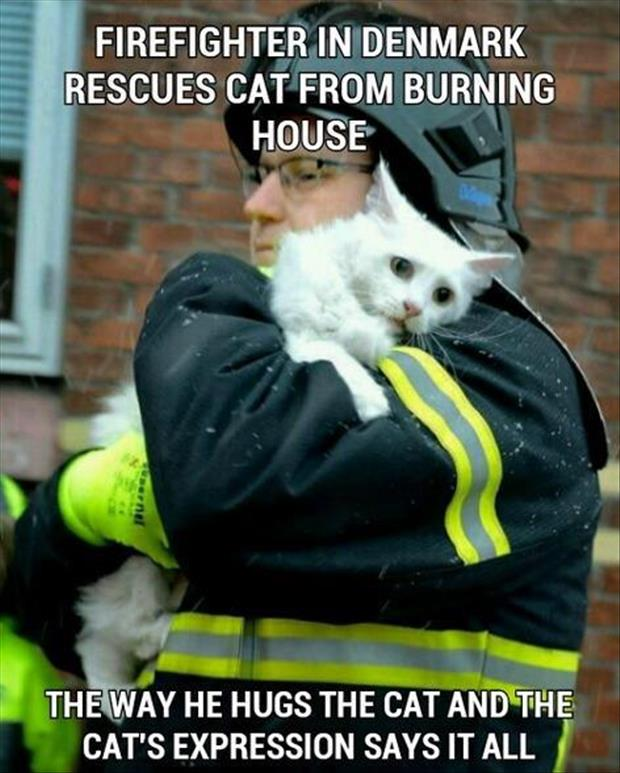 faith in humanity restored fireman saves cat