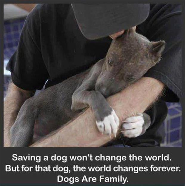faith in humanity restored saving dogs