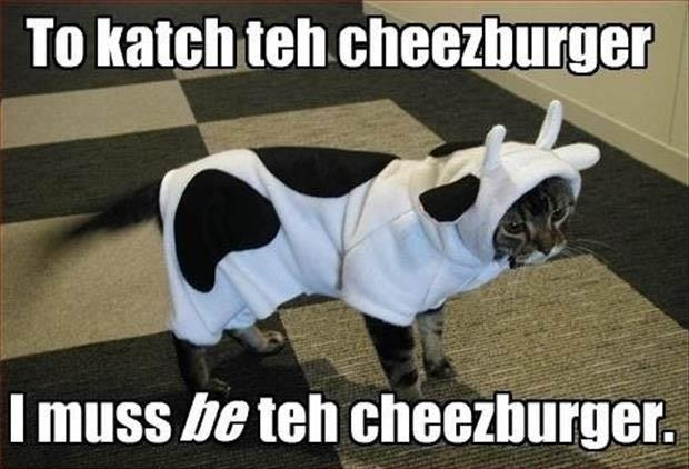 funny cat dressed as a cheeseburger