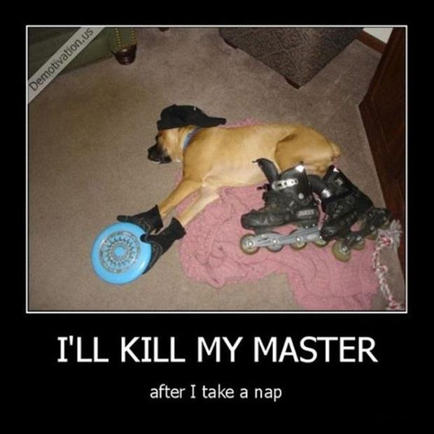 funny dog demotivational posters
