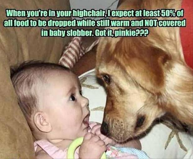 funny dog makes deal with baby