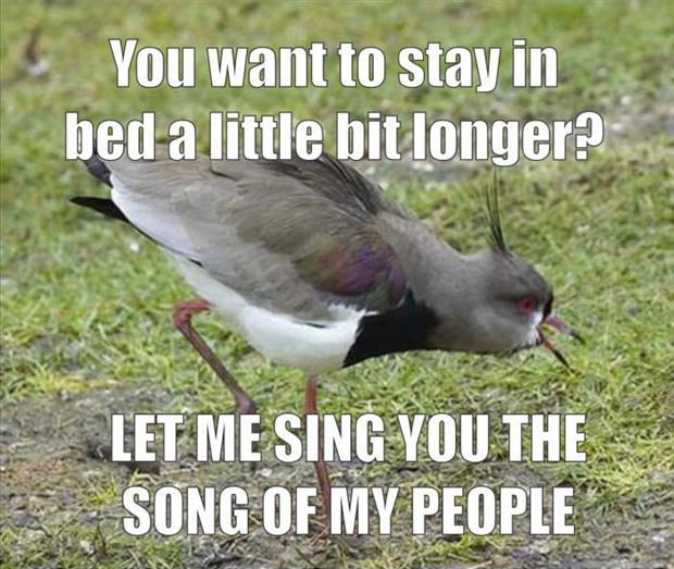 funny memes let me sing you the song of my people (5)
