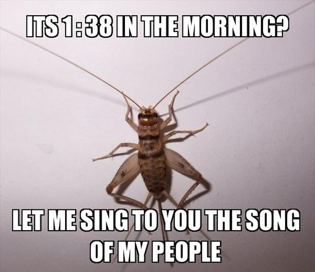 funny memes let me sing you the song of my people (8)