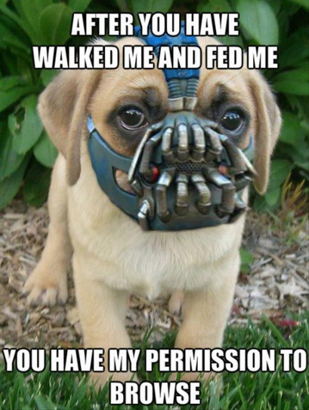 funny pictures bane dog