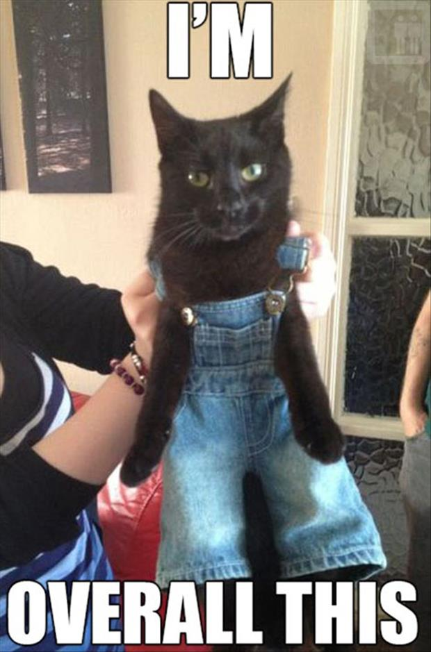 funny pictures cat in clothes