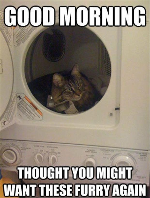 funny pictures cat in the dryer