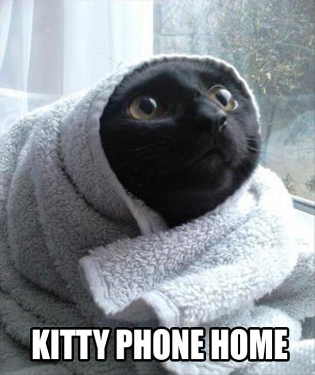 funny pictures cat looks like et