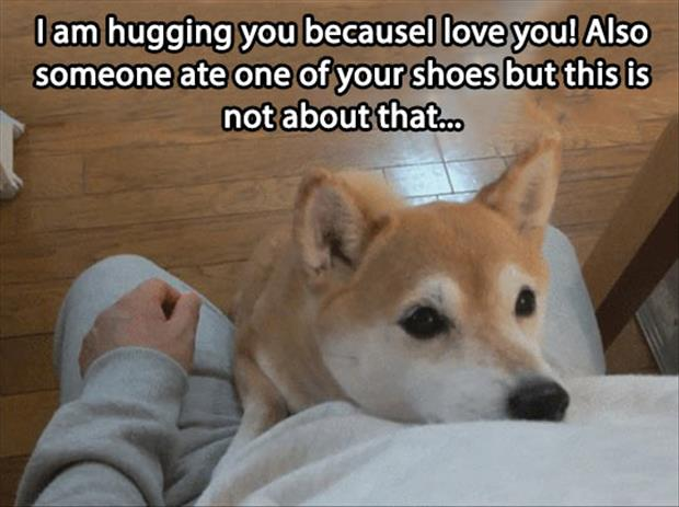 funny pictures dog hugs