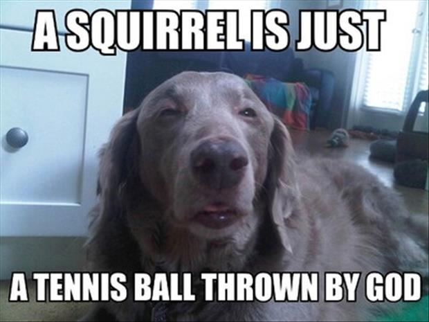 funny pictures squirrel