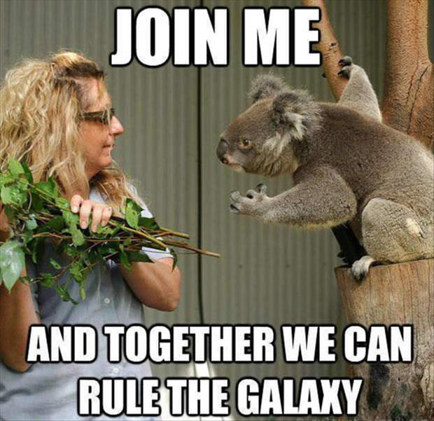 Koala Join Me Meme on Funny Gremlin Quotes