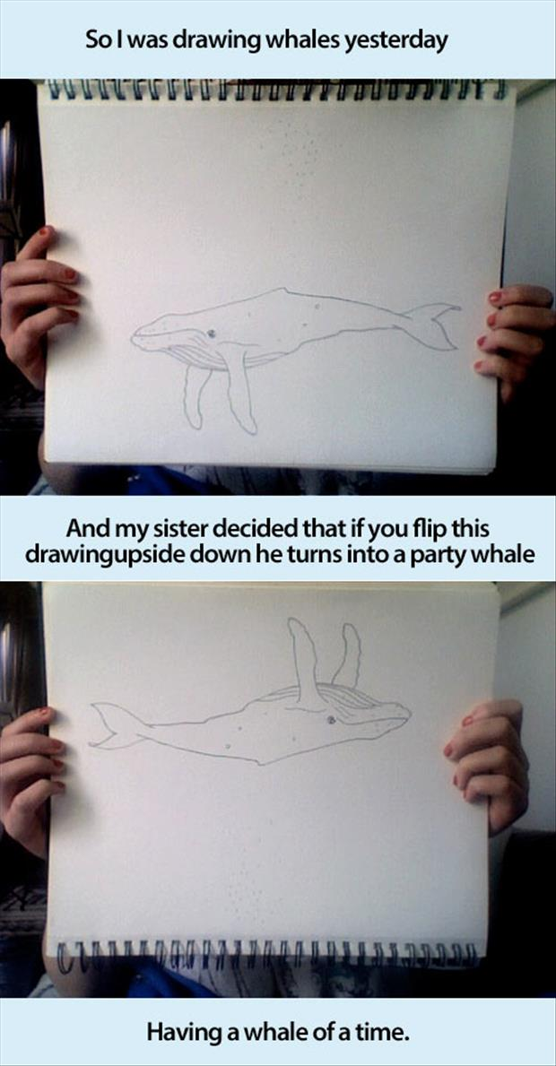 funny pictures whales