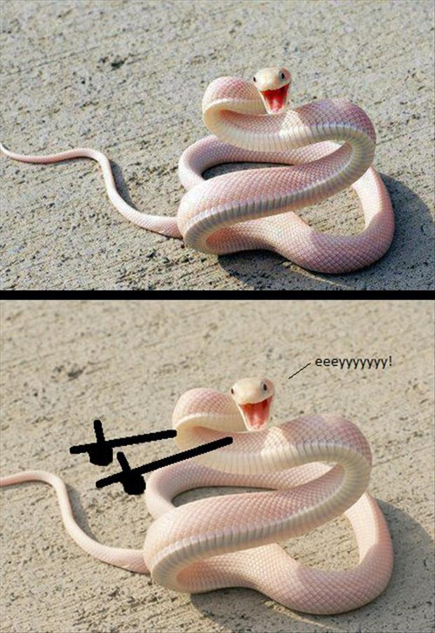 funny snakes