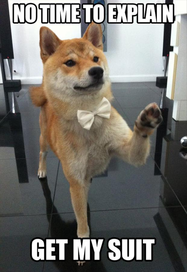 get my suit funny dog