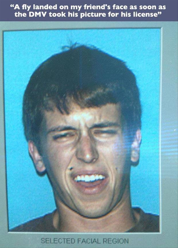 license photos funny pictures