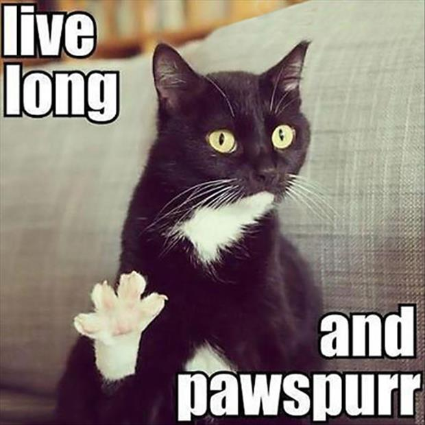 live long and prosper funny cats