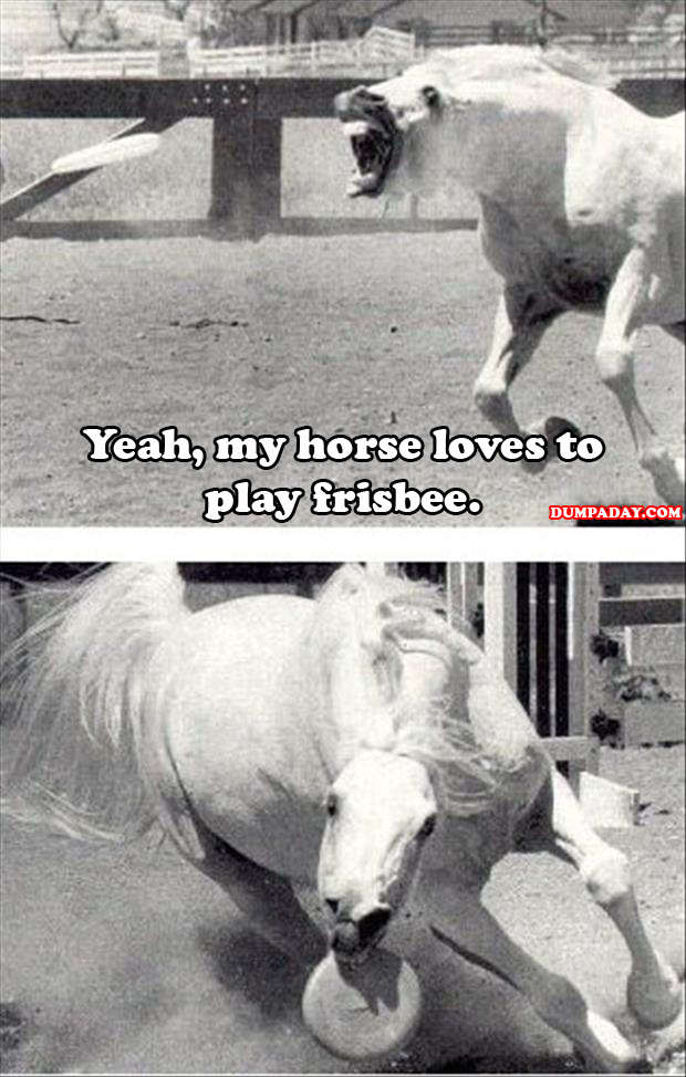 my horse likes to play frisbee your agrument is invalid