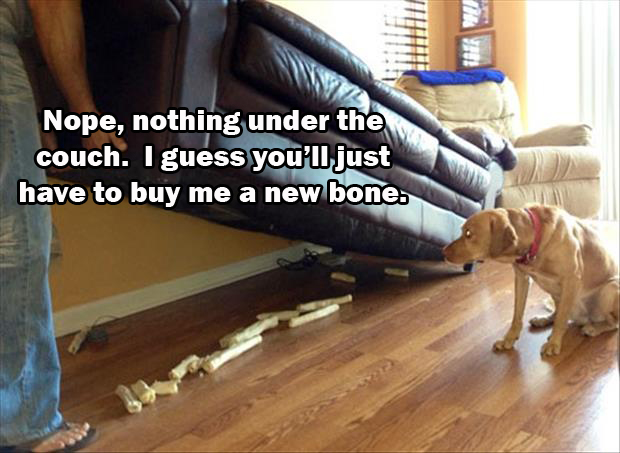 nope i nothing under the couch i guess you'll have to go buy me a new chew bone