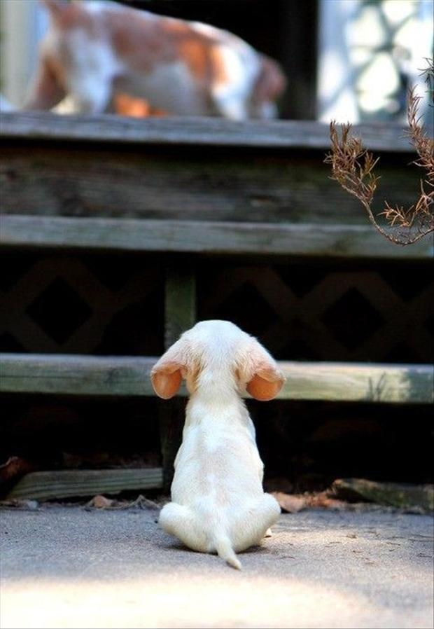 puppy going up stairs