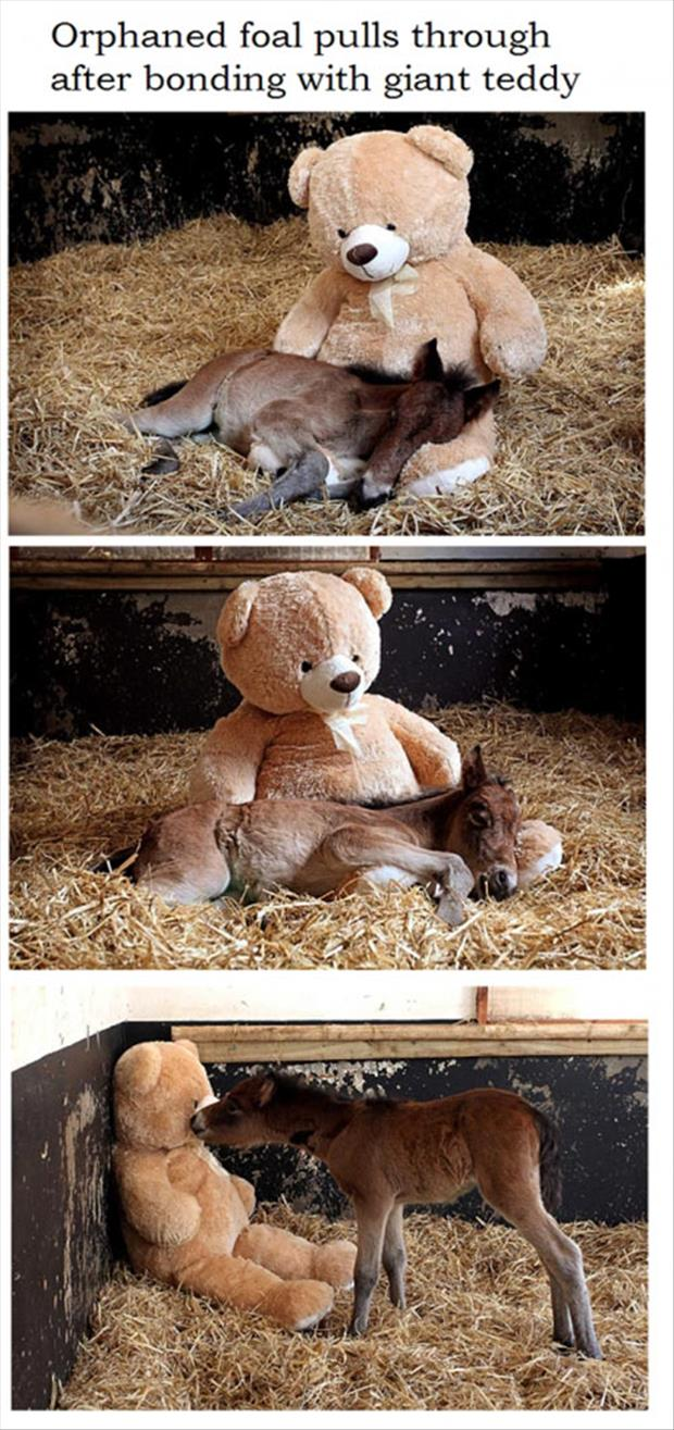 small pony bonds with giant teddy bear
