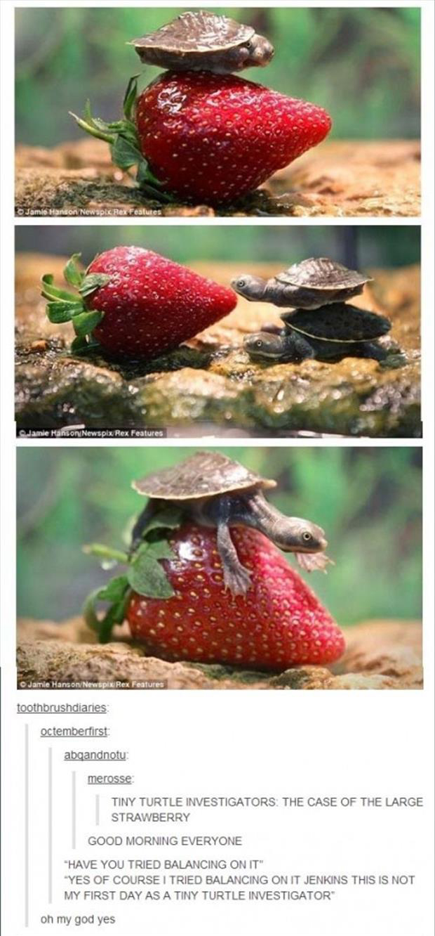 tiny turtle and large strawberry