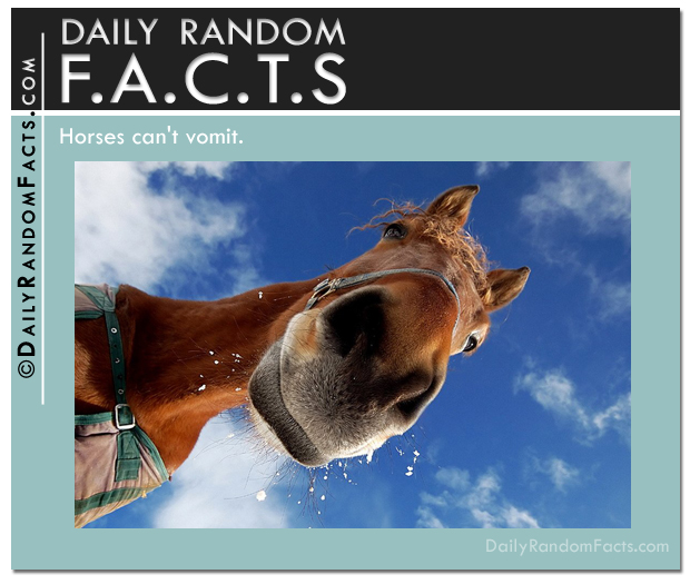 Daily Random Facts- Horses can't vomit