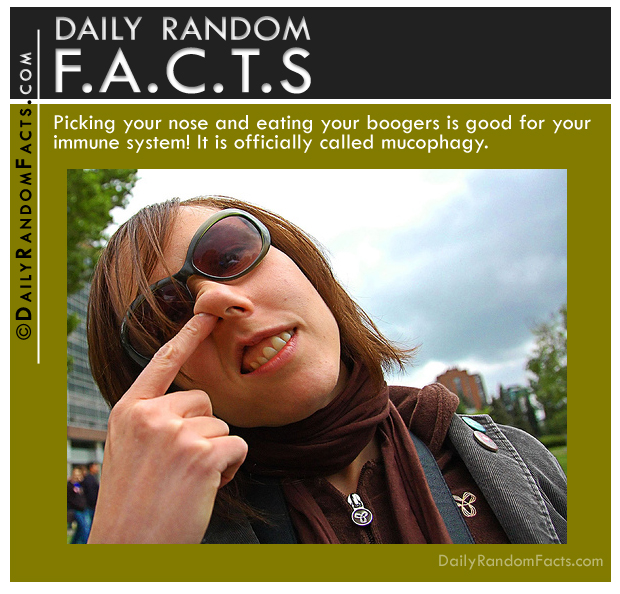Daily Random Facts- Picking nose