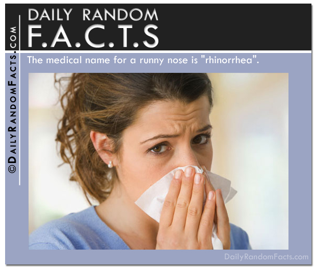Daily Random Facts- Runny Nose