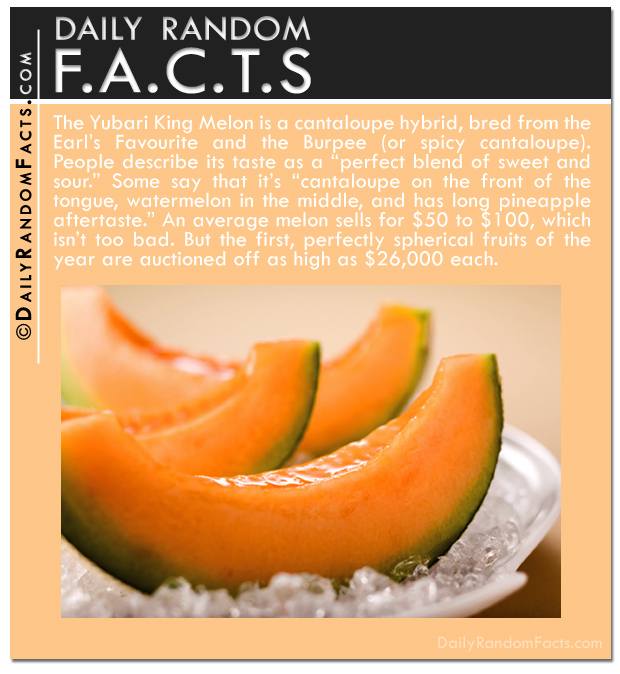 Daily Random Facts- Yubari King Melon