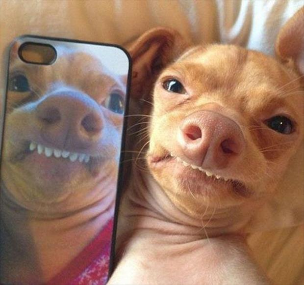 Funny dog reflection