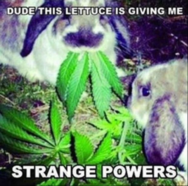 Rabbit lettuce power
