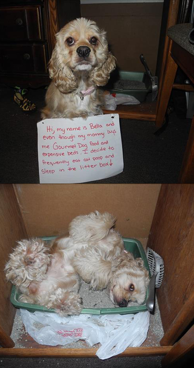 a dog shaming funny pictures