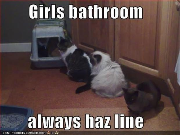 a girls bathrooms always have a line