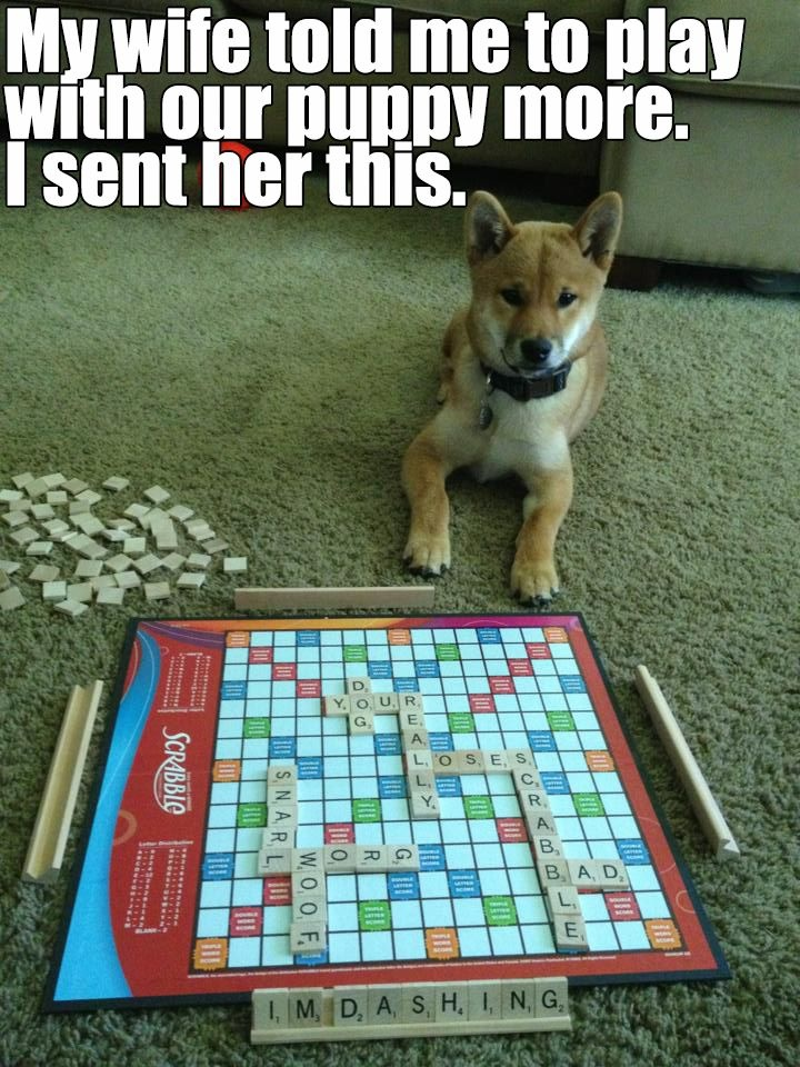 a playing scrabble with dog