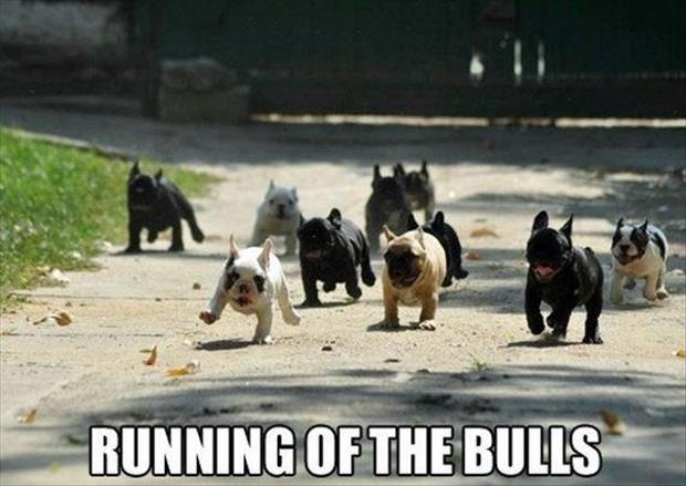 a running of the bulls