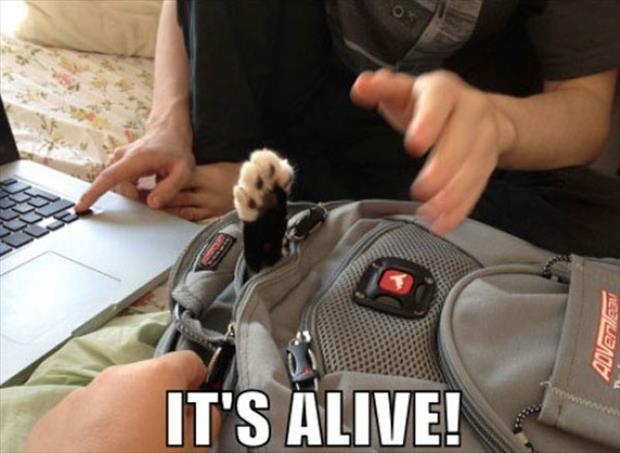 attack of the funny animal pictures, dumpaday (10)