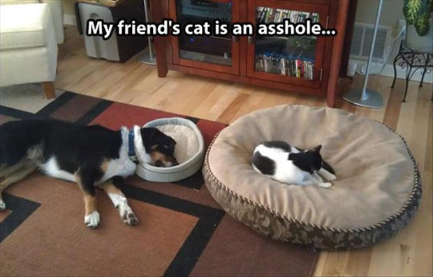 attack of the funny animal pictures, dumpaday (14)