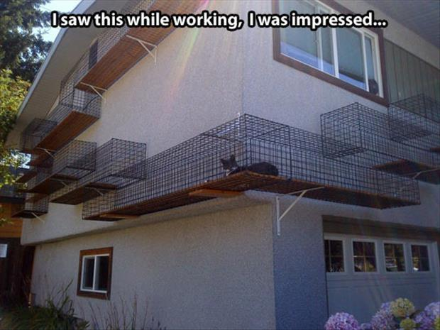 attack of the funny animal pictures, dumpaday (15)