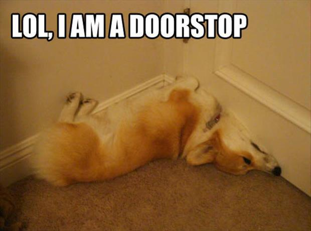 attack of the funny animal pictures, dumpaday (16)