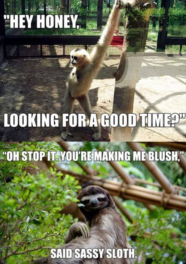 attack of the funny animal pictures, dumpaday (21)