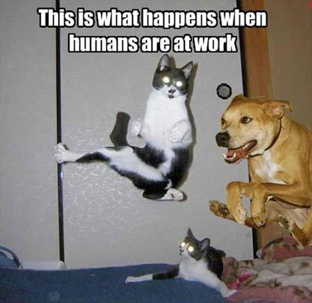 attack of the funny animal pictures, dumpaday (24)