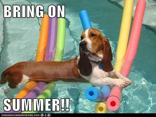 attack of the funny animal pictures, dumpaday (5)